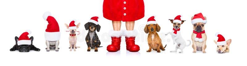 Fila grande del equipo de perros el días de fiesta de la Navidad imagen de archivo