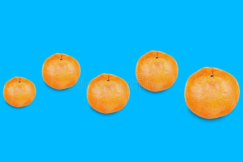 Fila orizzontale di interi mandarini arancio deliziosi freschi da piccolo a grande su fondo blu royalty illustrazione gratis