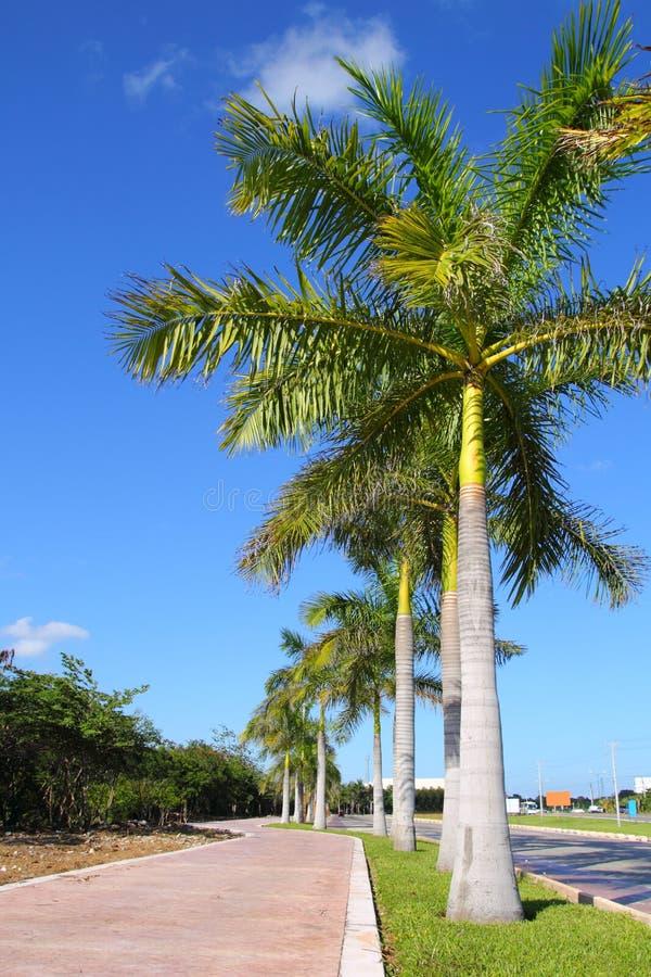 Fila real de las palmeras en camino tropical del jardín foto de archivo