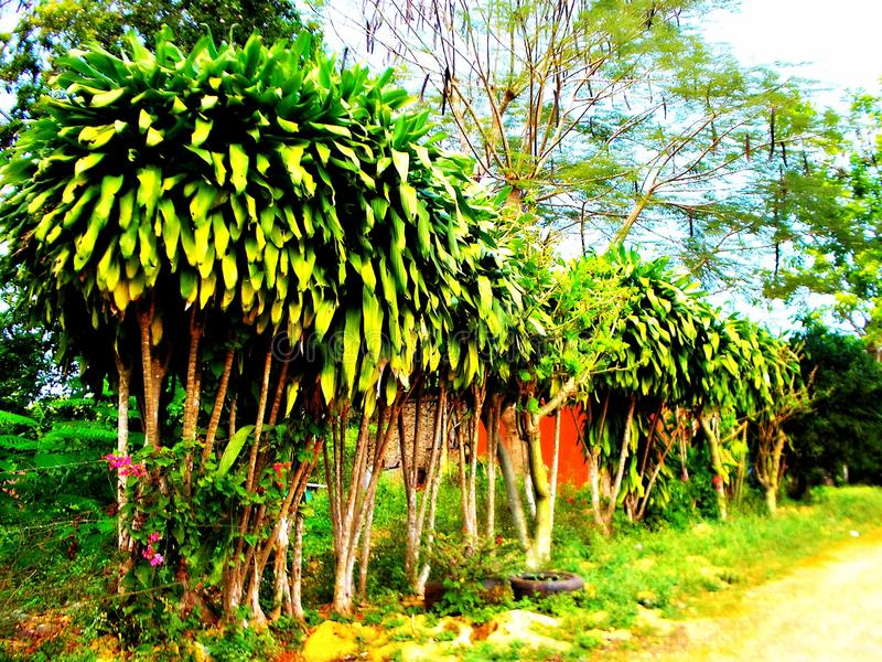 Fila verde en la colina de la grava imagen de archivo