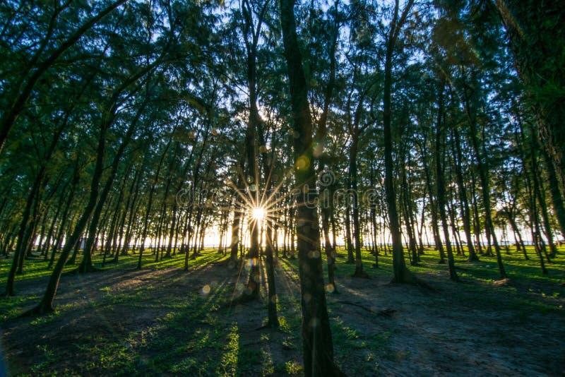 Filao Trees at Mont Choisy Beach Mauritius royalty free stock photos