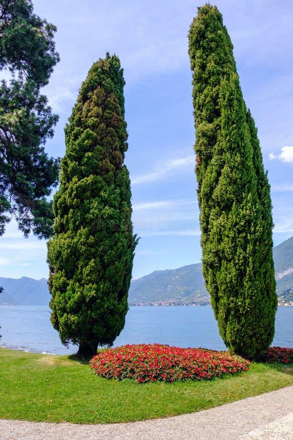 Filar kształtował zielonych drzewa na Jeziornym Como brzeg obraz royalty free