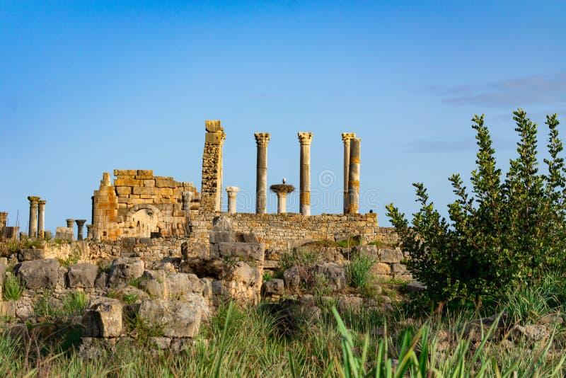 Filary i bociana gniazdeczko przy Romańskimi ruinami Volubilis w Maroko obraz royalty free