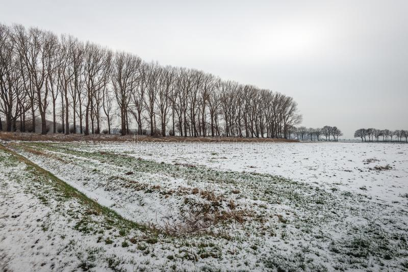 Filas de árboles desnudos en un paisaje hivernal del pólder fotos de archivo libres de regalías