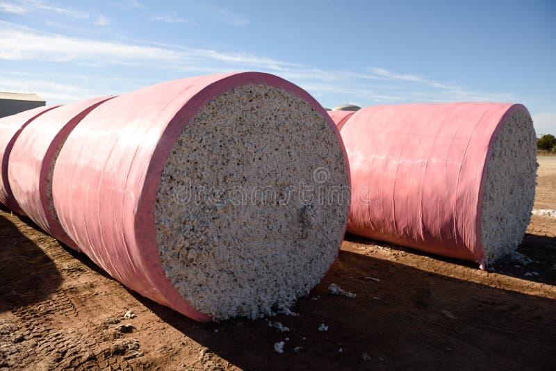 Filas de balas redondas recién cosechadas grandes de algodón blanco crudo listo para procesar fotografía de archivo libre de regalías