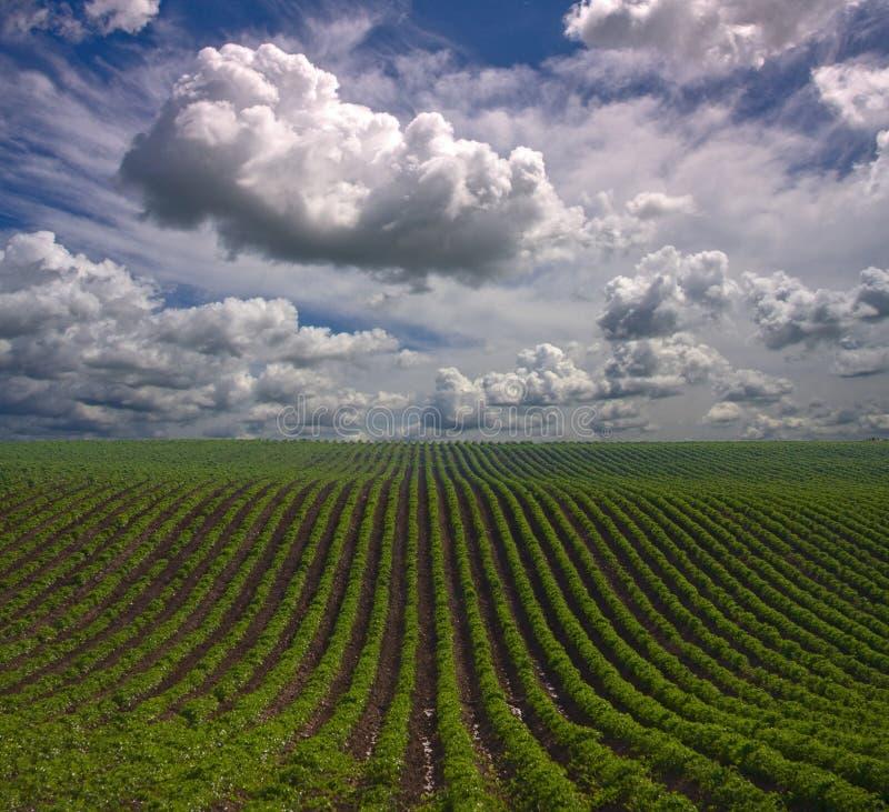 Filas de la granja fotos de archivo