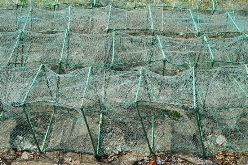 Filas de las trampas netas verdes de los pescados en una playa en Asia sudoriental foto de archivo