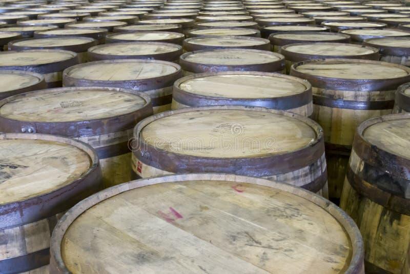 Filas de los barriles del roble en destilería del borbón imagen de archivo