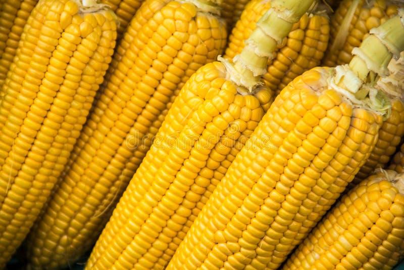 Filas de milho doce orgânico imagens de stock royalty free
