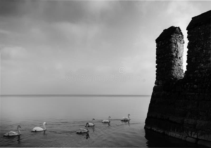Filas de patos en Sirmione, lago Garda en Italia al lado de un fortalecimiento medieval de la roca - estilo blanco y negro de la  fotos de archivo libres de regalías