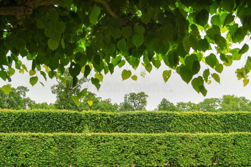 Filas de setos verdes a través de las hojas de la ejecución fotos de archivo libres de regalías
