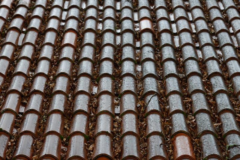 Filas de tejas mojadas en el tejado de un cierre de la casa para arriba, fondo, textura fotos de archivo libres de regalías