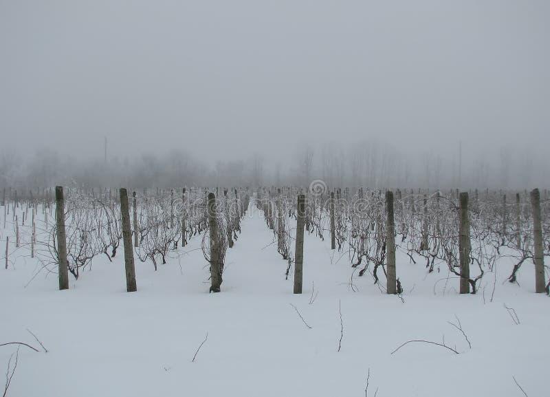 Filas del invierno de la vid fotos de archivo