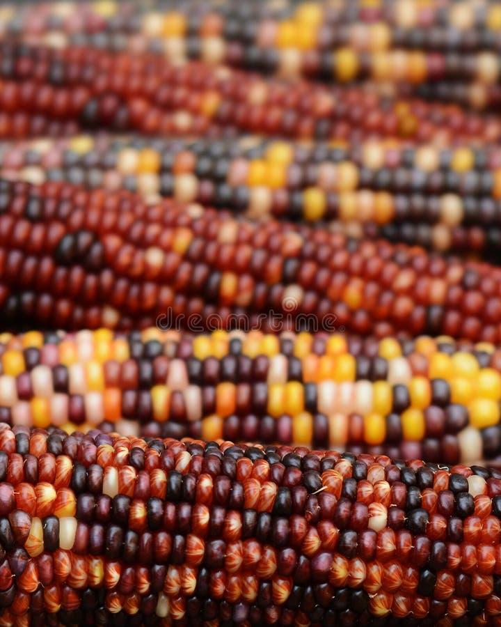 Filas del maíz indio colorido foto de archivo libre de regalías