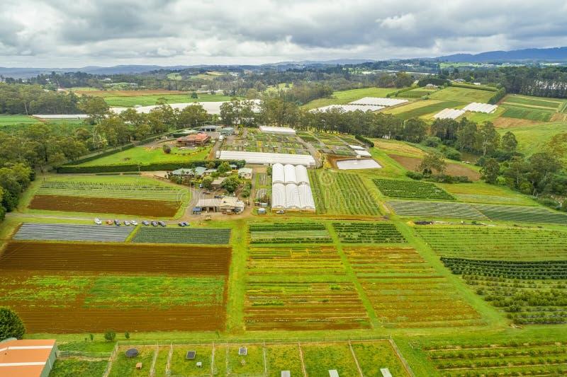Filas rectas de cosechas en área agrícola foto de archivo libre de regalías