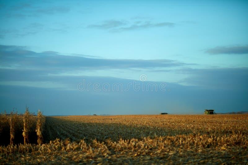 Filas secas de la cosecha de la granja y maquinaria distante de la cosecha imagenes de archivo