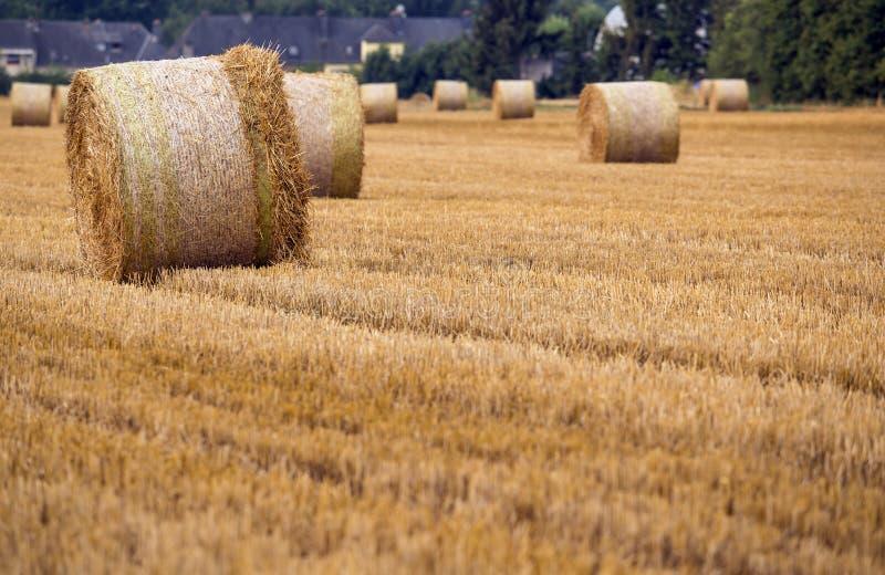 Fild di agricoltura immagine stock libera da diritti