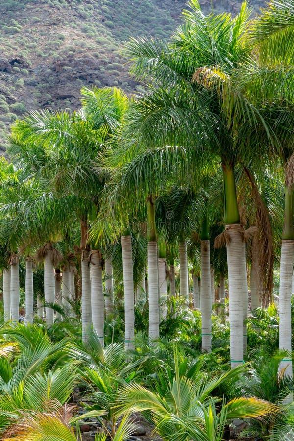 File degli alberi del cocco e della crassulacee differente sulla vendita nel negozio del giardino, in piante domestiche ed in pia immagine stock