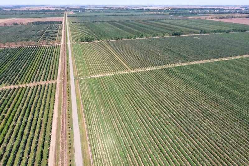 File degli alberi nel giardino Aerophotographing, vista superiore immagine stock libera da diritti