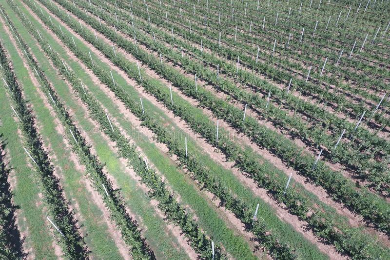 File degli alberi nel giardino Aerophotographing, vista superiore fotografia stock libera da diritti