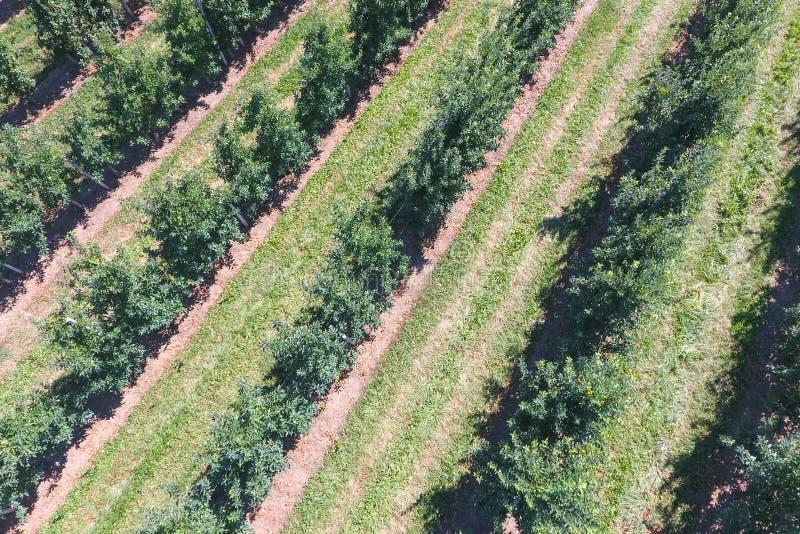 File degli alberi nel giardino Aerophotographing, vista superiore immagini stock libere da diritti