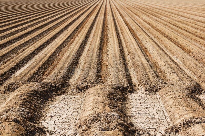 File del suolo dell'azienda agricola fotografia stock libera da diritti