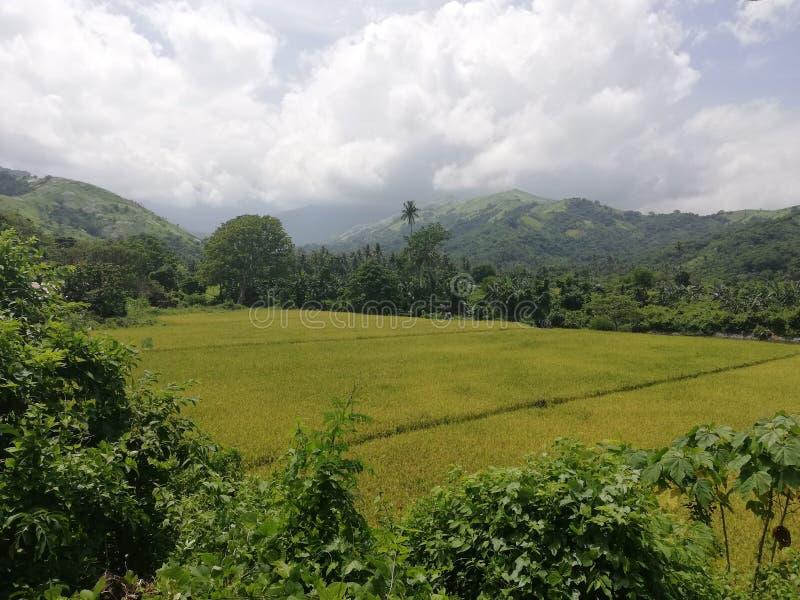 Fileds del arroz sourrounded por la vegetación y las colinas tropicales en Mindoro, Filipinas fotografía de archivo libre de regalías