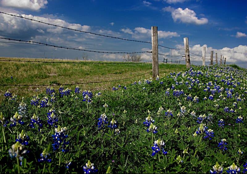 Fileira azul da capota fotografia de stock royalty free