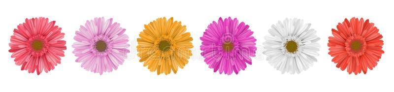 Fileira colorida da flor da margarida do gerbera para a bandeira ilustração stock