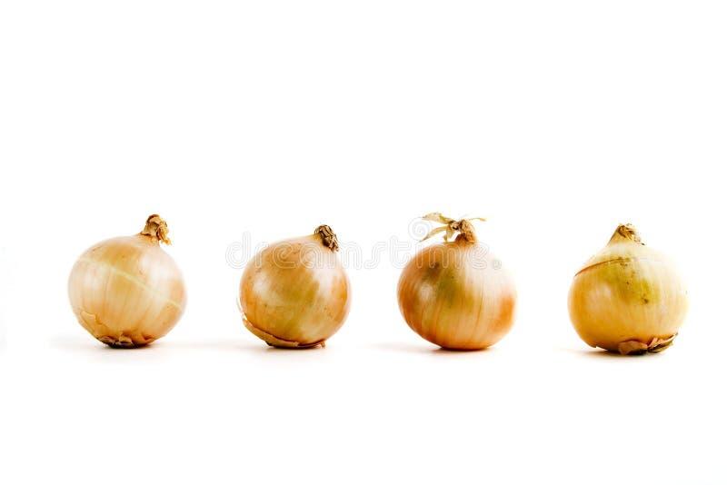 Fileira da cebola imagem de stock royalty free