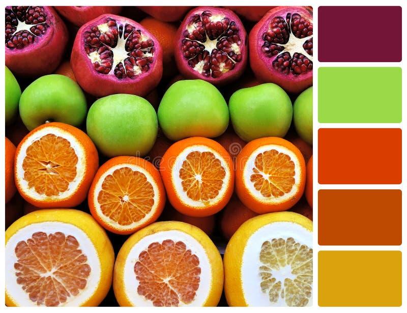 Fileira da mistura do fruto com amostras de folha da cor da paleta imagem de stock royalty free