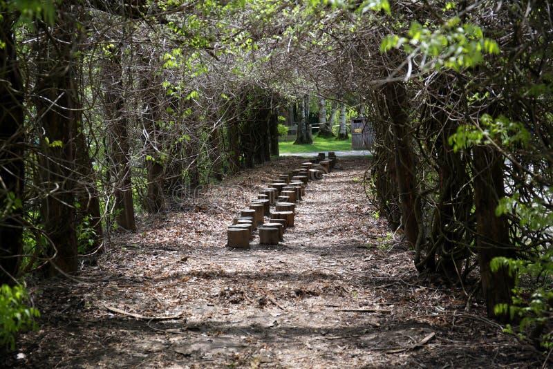 Fileira das árvores no parque fotos de stock