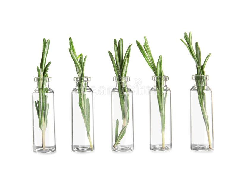 Fileira das garrafas de vidro com alecrins foto de stock