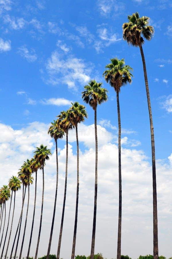 Fileira das palmeiras imagem de stock