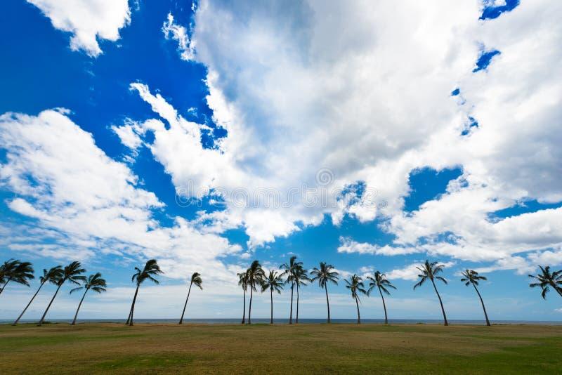 Fileira das palmeiras em um parque fotos de stock