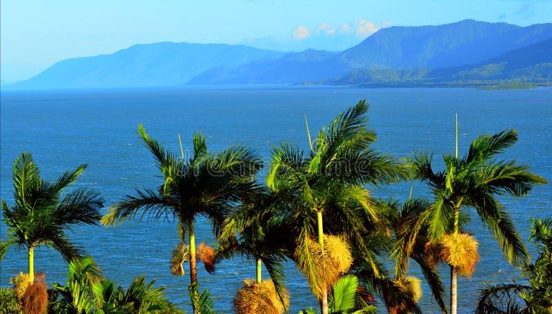 Fileira das palmeiras no porto Douglas Queensland Australia foto de stock