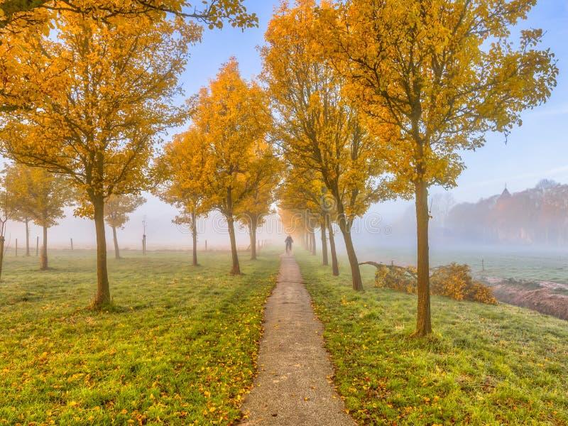 Fileira de árvores amarelas com a paisagem rural foto de stock