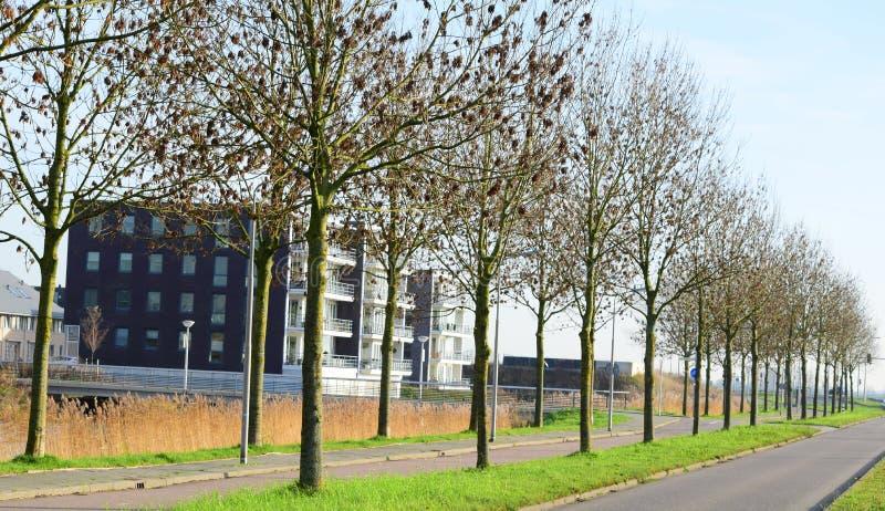 Fileira de árvores desencapadas imagem de stock