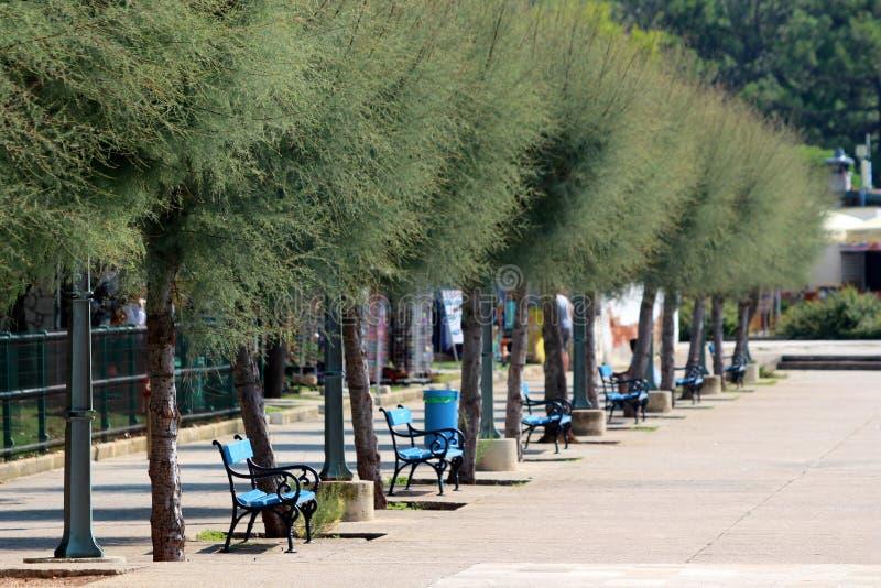 Fileira de bancos públicos de madeira azuis múltiplos com as árvores pretas do quadro do ferro com ramos densos e as luzes públic imagem de stock
