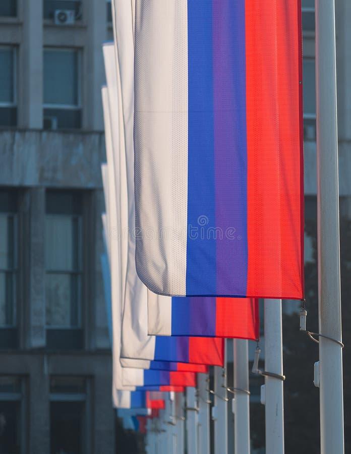 Fileira de bandeiras sérvios coloridas nacionais, patrióticas, vermelhas, azuis e brancas fotografia de stock