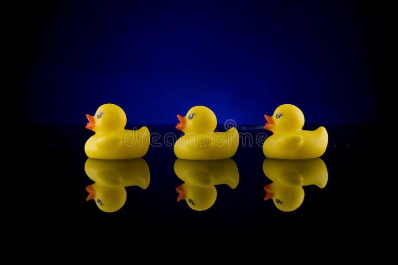 Fileira de borracha do pato com reflexão 2 fotos de stock