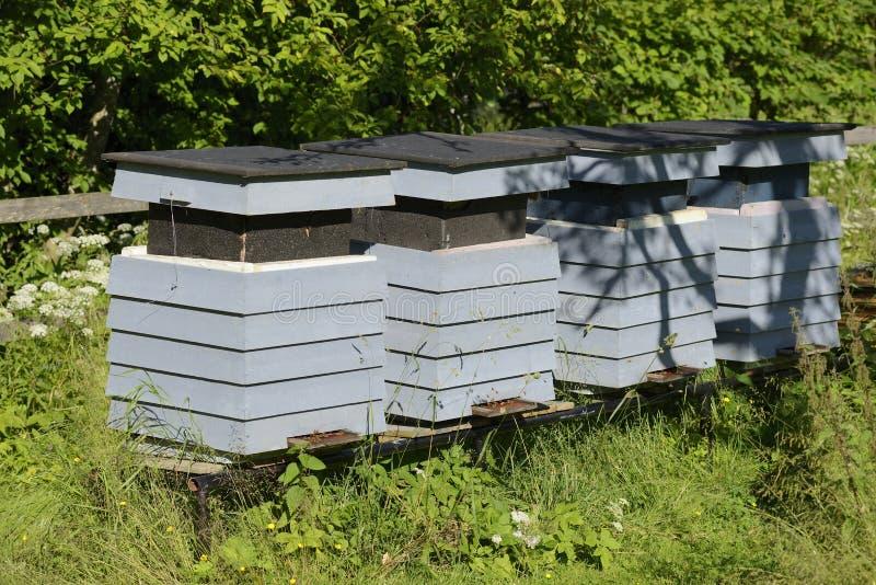 Fileira de Honey Bee Hives imagens de stock