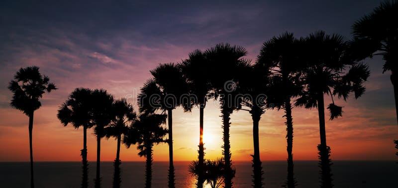 Fileira de palmeiras do coco com por do sol dramático bonito do céu ou foto de stock