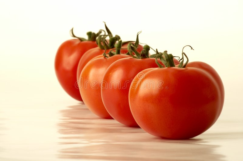 Fileira do tomate foto de stock royalty free