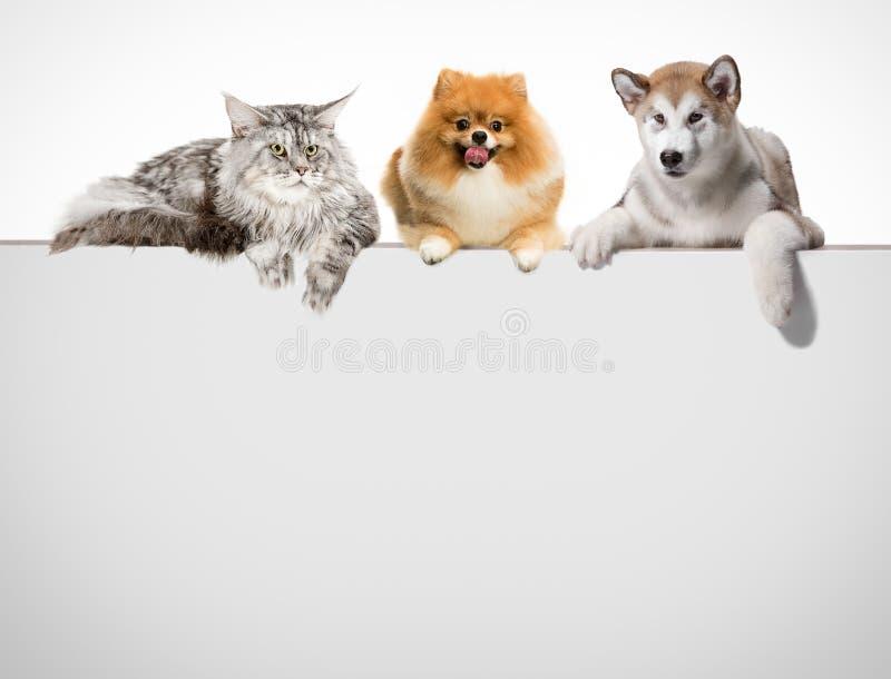 Fileira dos gatos e dos cães que penduram suas patas sobre uma bandeira branca fotografia de stock royalty free