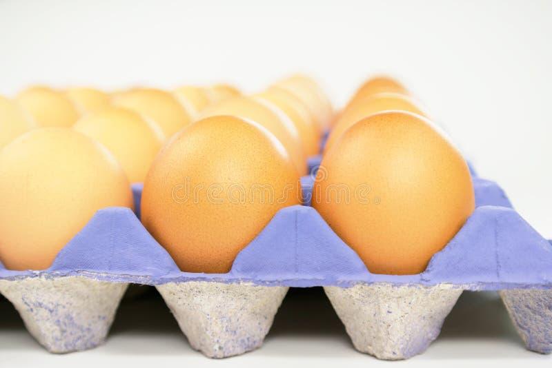 Fileira dos ovos no recipiente roxo imagens de stock royalty free