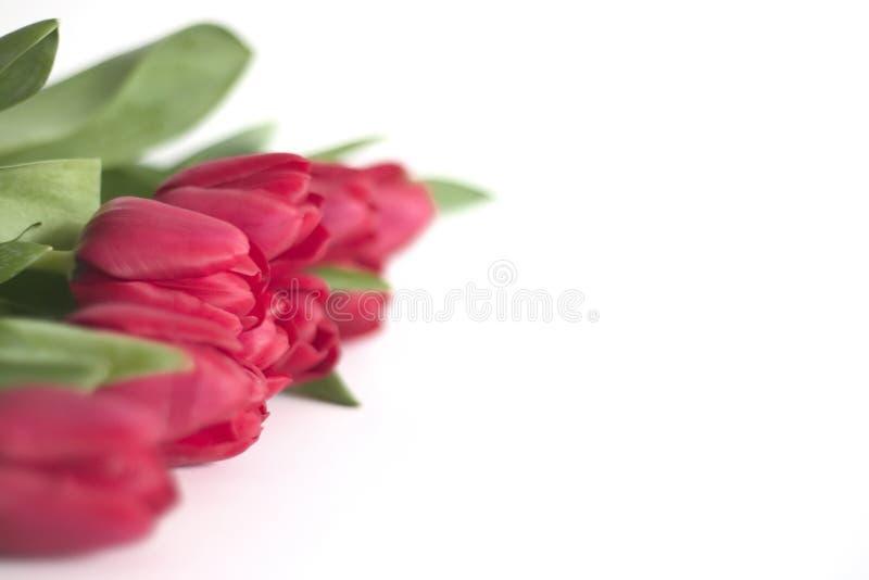 Download Fileira Dos Tulips, Departamento Raso Foto de Stock - Imagem de cópia, romance: 525650