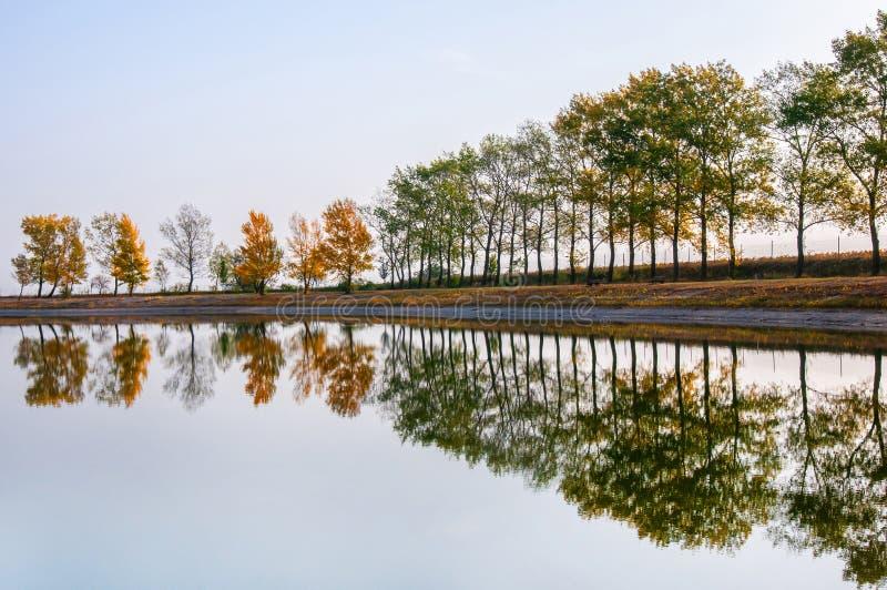 Fileira outonal da árvore na costa que espelha no lago público da natação fotografia de stock