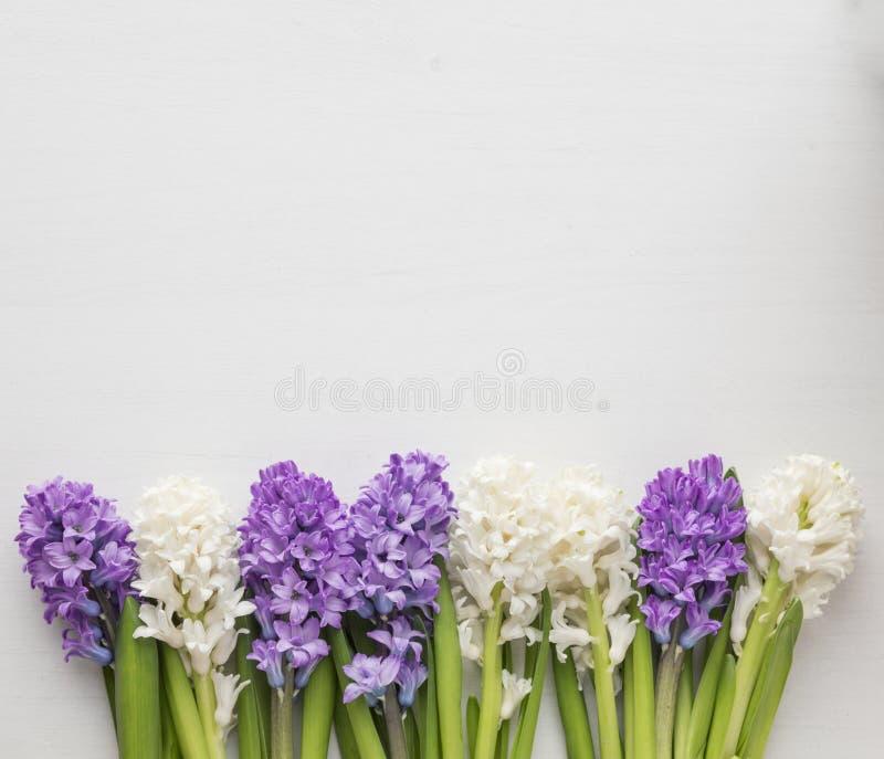 Fileira roxa e branca do jacinto foto de stock royalty free