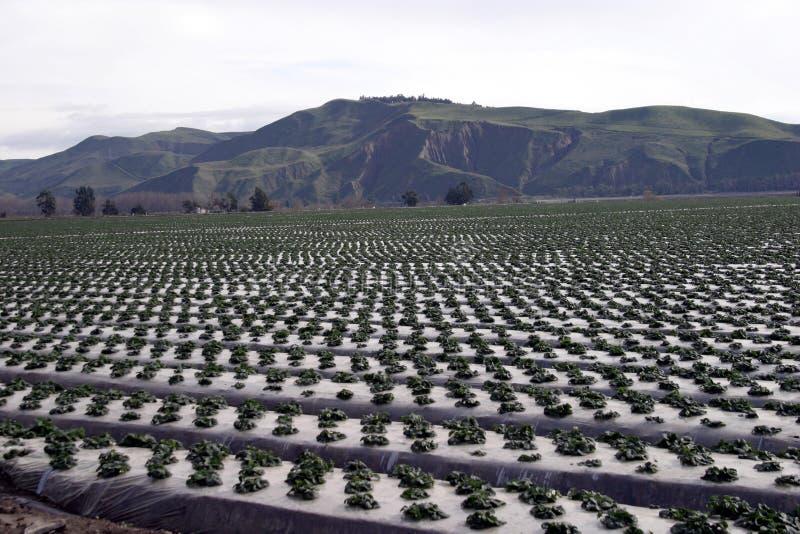 Fileiras da exploração agrícola imagem de stock